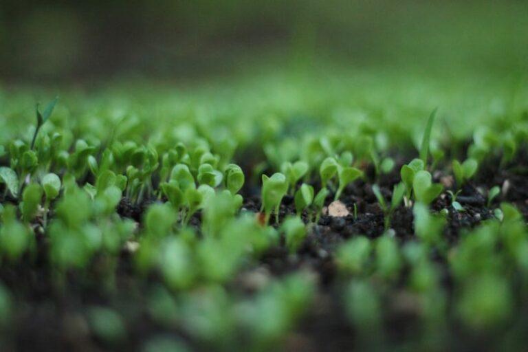 Les produits bio – Cuisine Blog